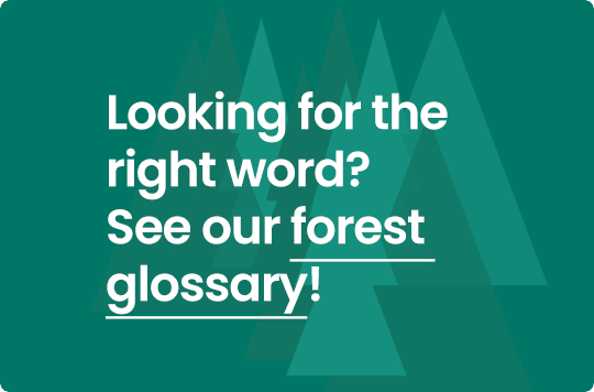 Forest Glossary