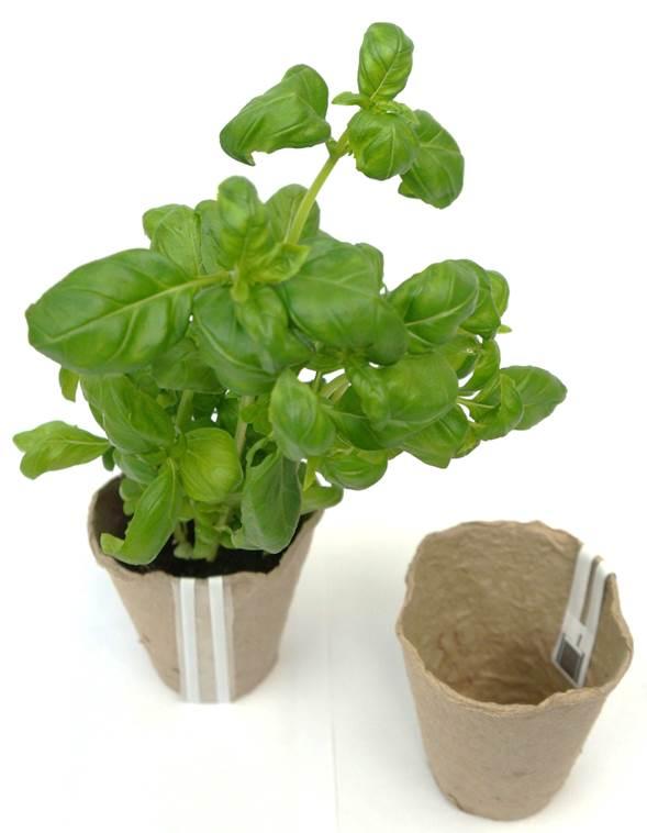 Tweeting biodegradable flowerpot. Photo: VTT