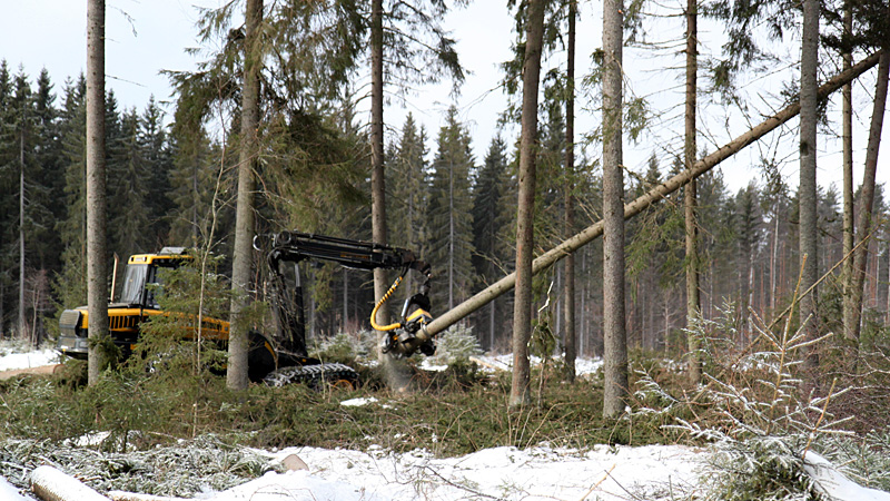In Hyvinkää, for example, land use planning restrictions decrease the largest sustainable logging volumes, as well as the timber sales revenues, by seven percent.