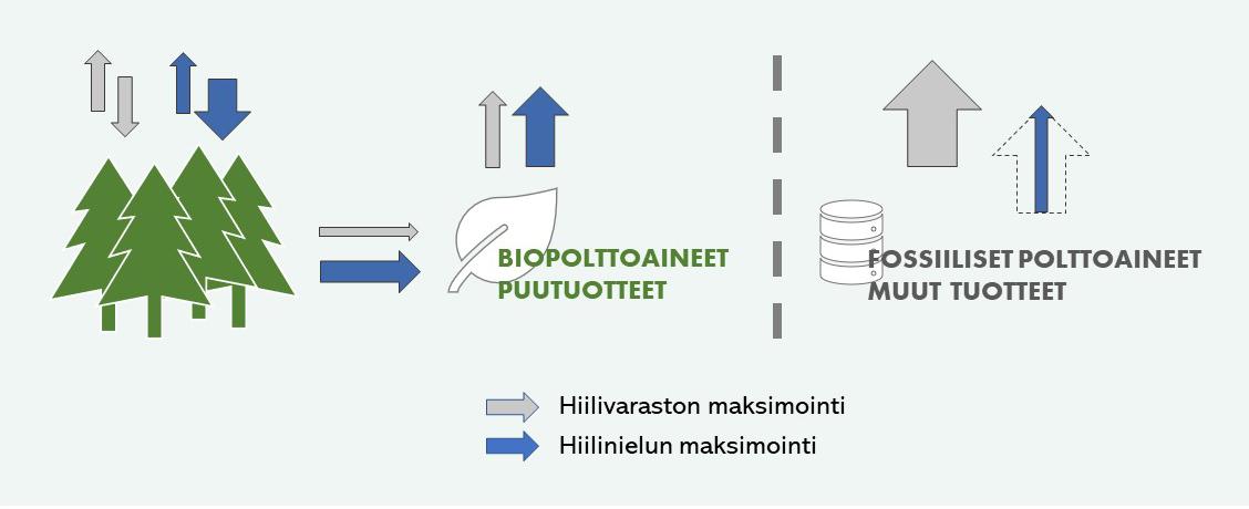Kuva esittää, kuinka metsän hiilivaraston maksimointiin pyrkivä politiikka vähentää hiilen kiertoa ja ilmastopäästöjä biotuotteiden kautta, mutta kasvattaa fossiilipäästöjä. Toisaalta metsän hiilinielun maksimointiin tähtäävä politiikka vahvistaa hiilen kiertoa biotuotteiden kautta ja pienentää fossiilipäästöjä. Käytännössä kuitenkin esimerkiksi Suomessa on kyetty kasvattamaan yhtaikaa sekä metsien hiilinieluja että niiden hiilivarastoja.