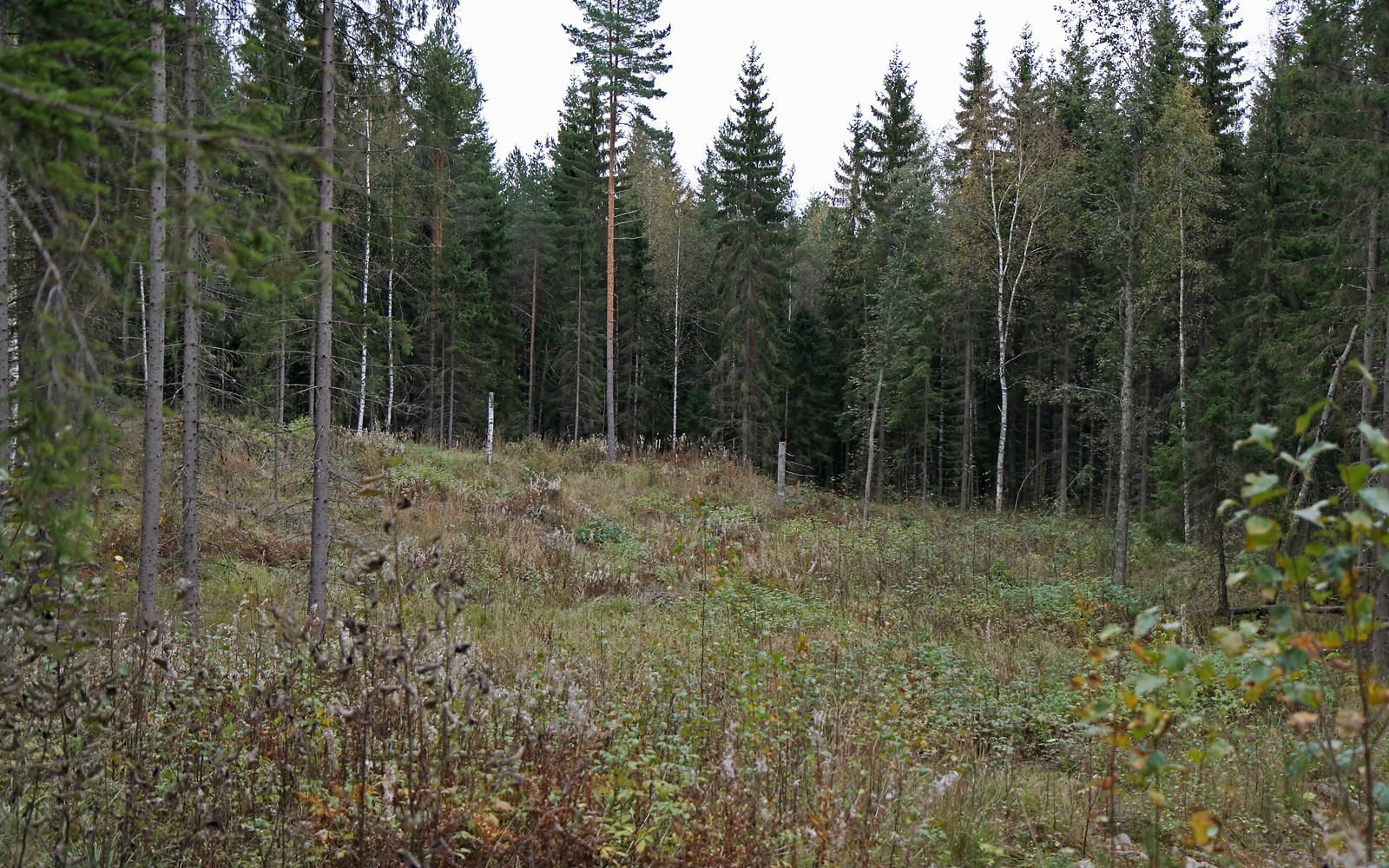 Forest after small-diameter logging in Vesijako in Central Finland. Photo: Krista Kimmo