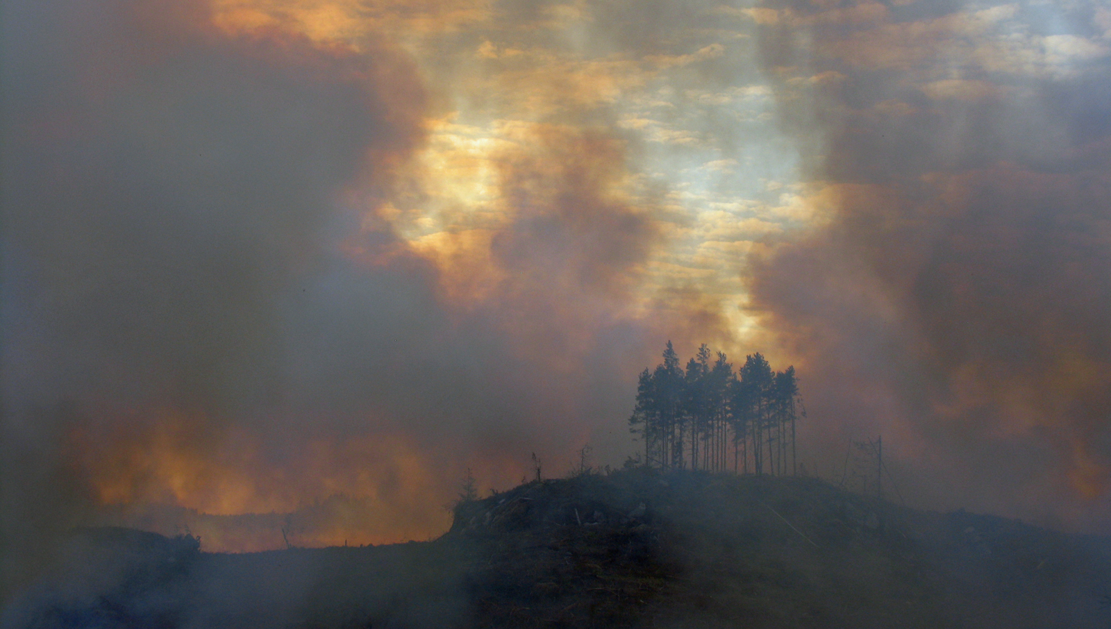 Every year, fewer than one thousand of the 26 million forest hectares in Finland burn down in wildfires. Photo: Henrik Lindberg