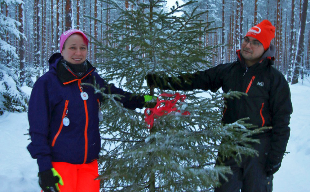 According to the Finnish Christmas Tree Growers' Association, the Christmas trees sold in Finnish cities and towns often originate less than 100 km away from the point of sale. The Christmas tree found by Anne and Lassi, too, is locally produced. Photo: Inkeri Palmio