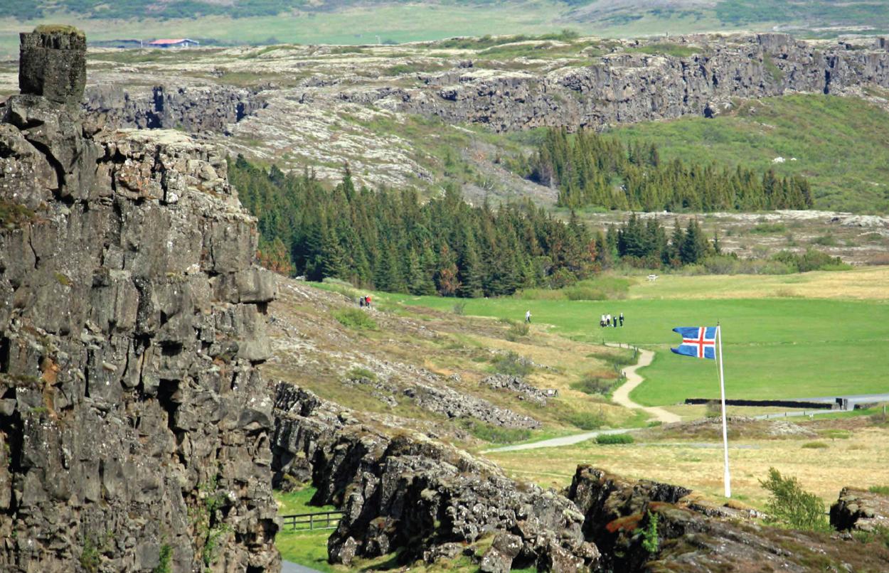 Metsä Islannissa. Kuva: Iceland Forest Service