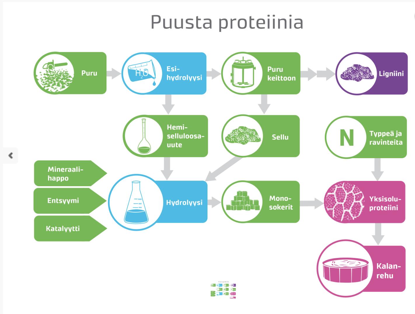 Kaaviokuva siitä, miten puusta aiotaan tehdä proteiinia kalanrehuun.