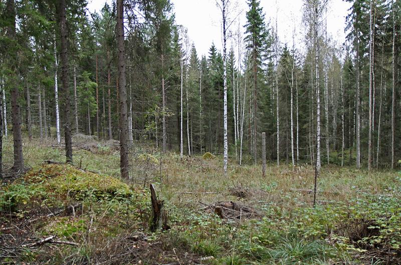Small-diameter logging area in Padasjoki. Photo: Krista Kimmo