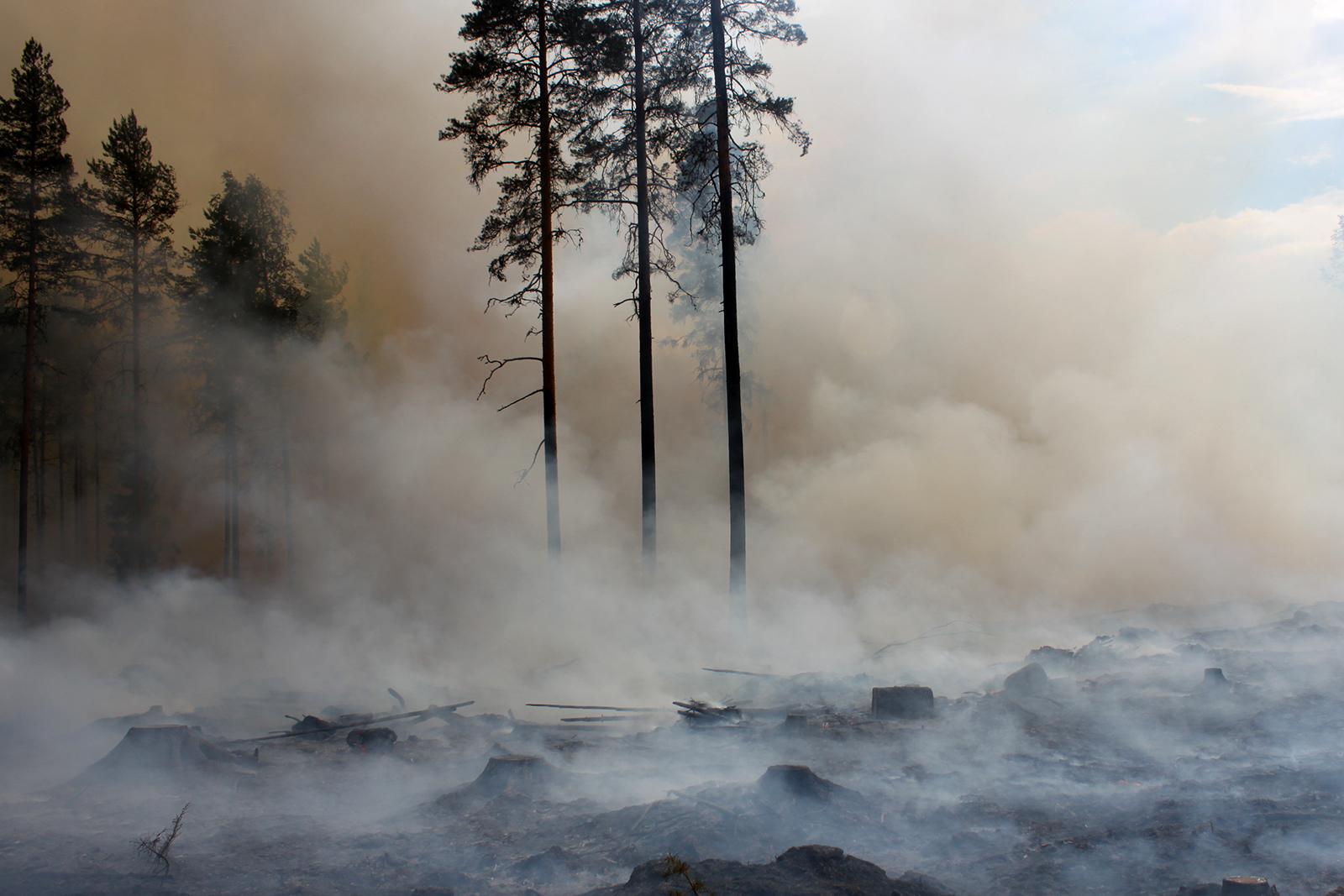 The burned area must be watched until the next decent rain. Pine seeds will be sown later. Photo: Aino Ässämäki
