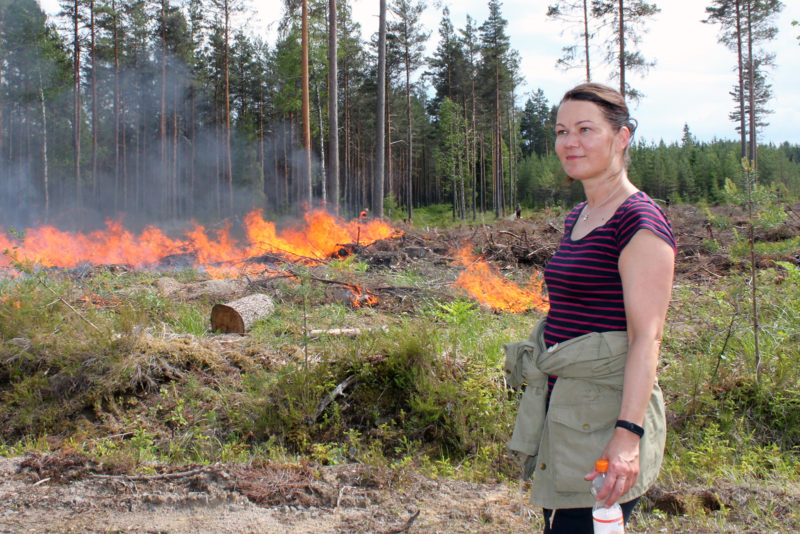 Forest owner Piia Niskala watches the fire being lit on a site where regeneration felling was done last winter. Photo: Aino Ässämäki