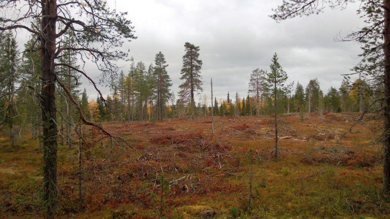 Metsähallituksen avohakkuuala. Kuva: Lauri Karvonen
