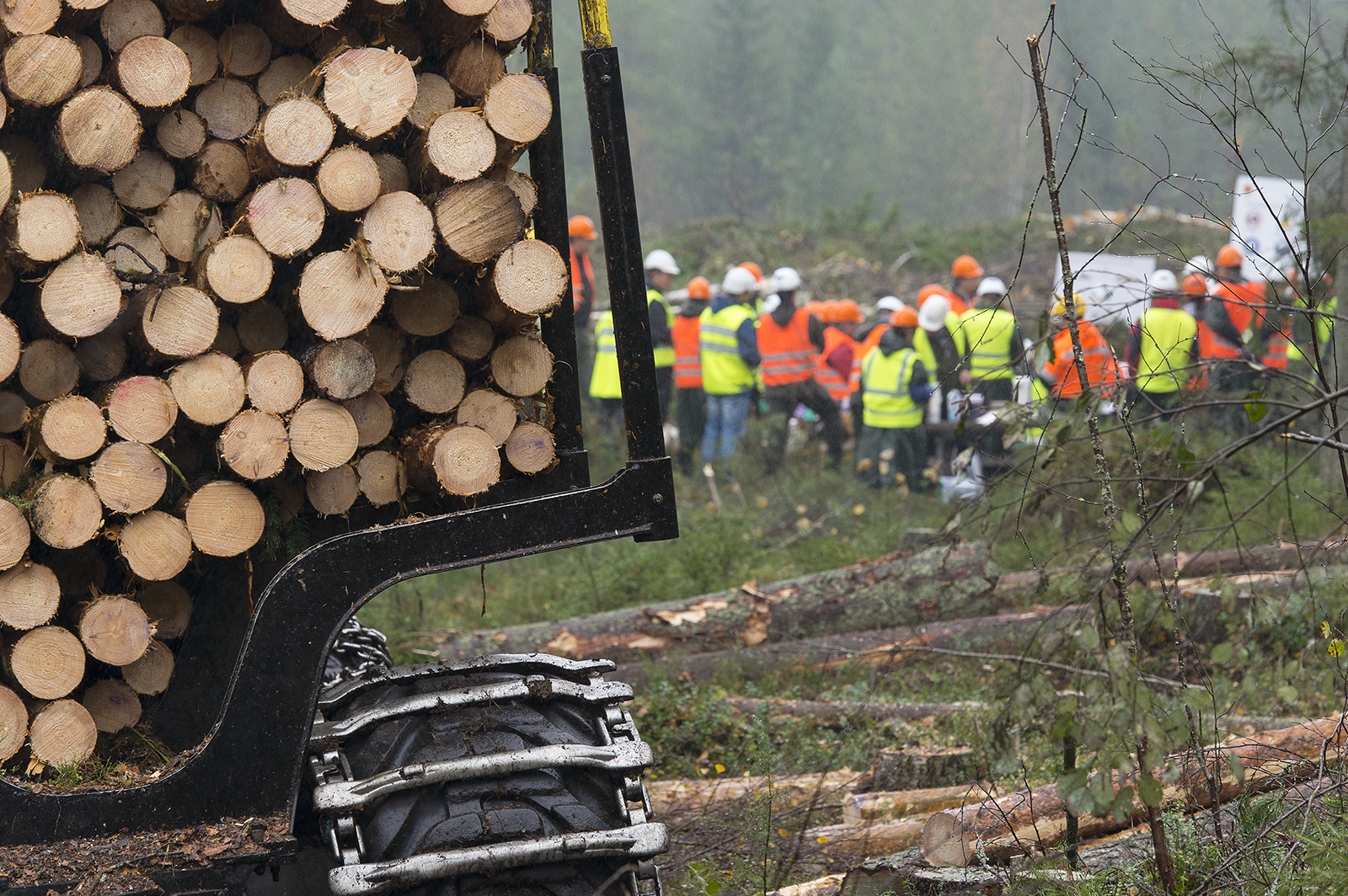 Suomalaiselle metsäosaamiselle on runsaasti kysyntää. Kuva: Saku Ruusila