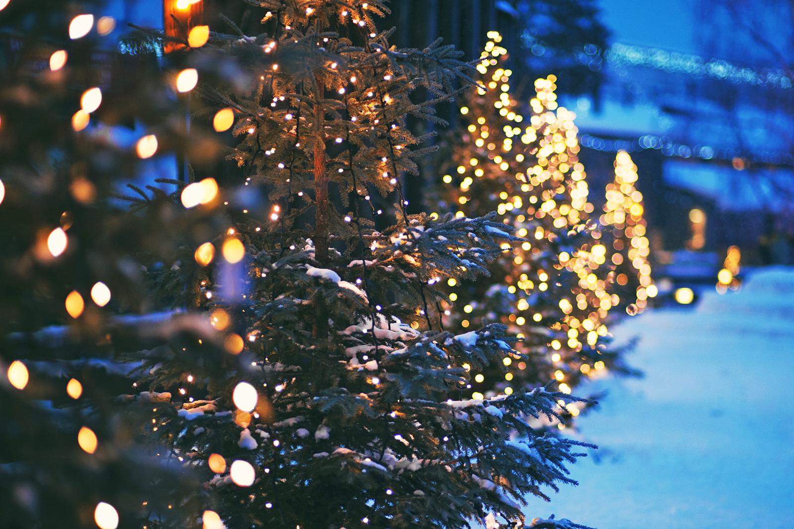 Christmas trees. Photo: Shutterstock