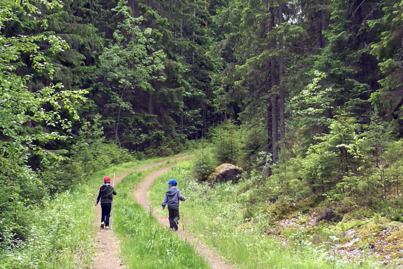 Forest walk. Photo: Anna Kauppi