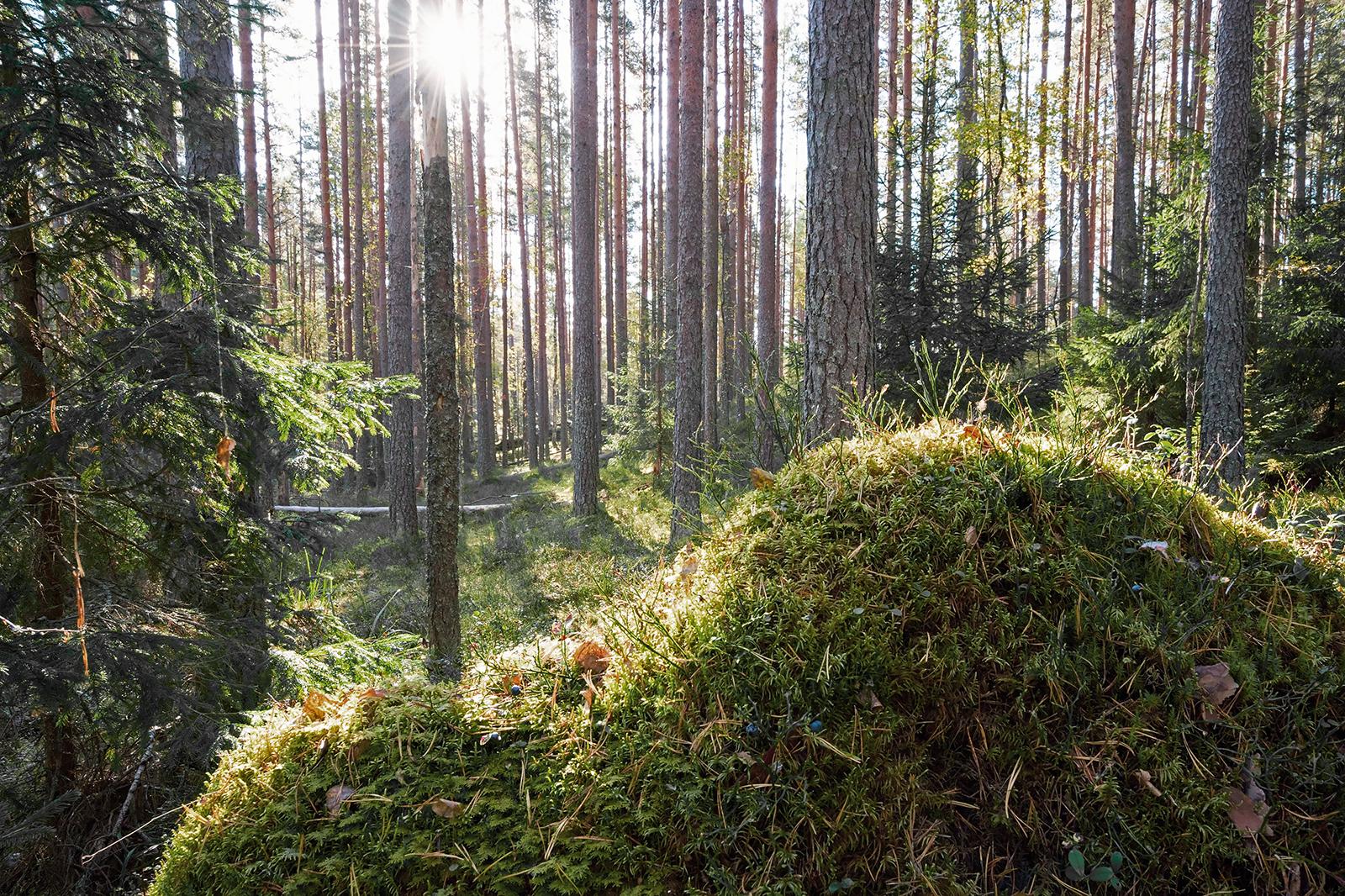 Forest. Photo: Shutterstock